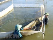 Projects to revive fishery resources in central provinces launched