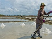 Cambodia may face salt shortage this year