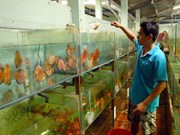 Vietnam has great potential for export of ornamental creatures