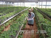Da Lat: Farm tours attractive to visitors