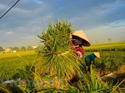 Thailand to hold national rice convention in late May