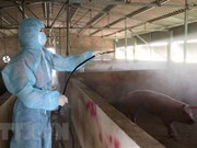 Localities apply drastic measures against African Swine Fever