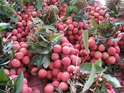 Measures sought to help Bac Giang export more lychee