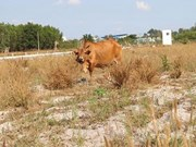 Major projects languish as speculators abandon land plots