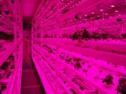 Singapore: From sky farms to lab-grown shrimp