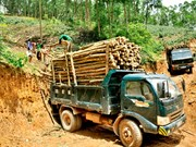 Agriculture ministry gathers ideas for timber regulations