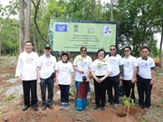 Thai Forest Department, Indian Embassy plant trees commemorating Gandh