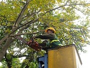 Hanoi to cut back 40,000 trees to cope with typhoons