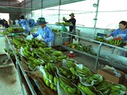 VN's agricultural products facing barriers to enter Chinese market