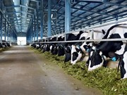 Vinamilk plans another dairy farm in Ha Tinh