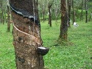Malaysia's natural rubber production falls over 30 percent in April