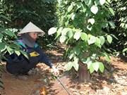 Dak Lak expands using efficient irrigation systems for crops