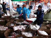 Quang Tri works hard to fight illegal fishing