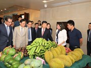 Forum aims to bolster Vietnam's ties with southern China localities