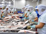Tra fish exports to EU to surge in 2019