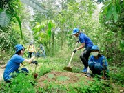 Dong Nai: Forest planting improves habitats of elephants