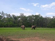 Two elephants released back to the wild