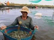 Kien Giang widens efficient rice farming, aquaculture models