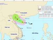 Quang Ninh bans vessels from sailing offshore ahead of typhoon