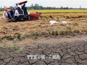 Drought forecast for central, south-central coastal provinces in 2019