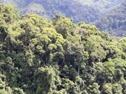 Quang Tri targets to triple FSC forest area in ten years