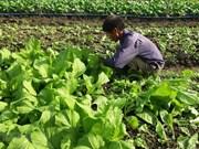Ba Ria-Vung Tau starts to embrace organic farming