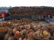 Malaysia to lodge complaint with WTO about EU's palm oil curbs