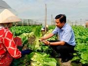 Long An develops advanced farming models