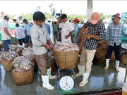 Kien Giang steps up efforts against IUU fishing