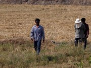 Thailand makes artificial rain to fight drought