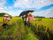 Ca Mau adjust list of key local agricultural products