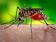 Dengue fever claims 34 lives in Laos