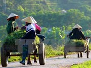 Over 5,400 communes nationwide become new-style rural areas