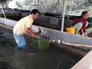 Farmers earn higher incomes from coldwater fish