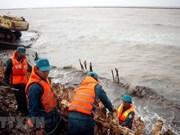 Ca Mau consolidates dykes against erosion along western coast