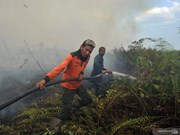 Nearly 19,000 fire hotspots identified in SEA, Papua New Guinea