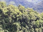 Thua Thien-Hue: Wood exports soar 40 percent