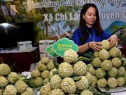 Lang Son promotes local Chi Lang custard-apple in Hanoi