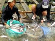 Tra, basa top seafood exports