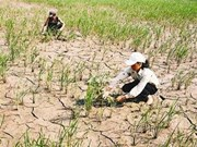 North prepares for drought