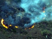 Fire extinguished in primeval heritage forest