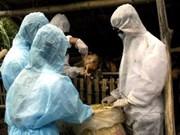 Vietnam's first bird flu death in 2010