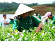 20 countries to attend Vietnam Tea Outlook 2010