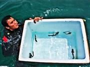 Twenty-five shark species released into sea