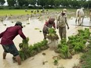 Fertiliser maker rush to transfer technology for Cambodians