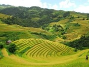 Terraced fields are like a watercolour painting