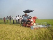 FAO helps Vietnam develop rice seed production