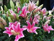 Thousands flock to flower festival