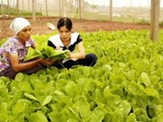 Seminar seeks ways to develop organic vegetables