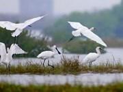 Mekong Delta seeks sustainable wetland usage